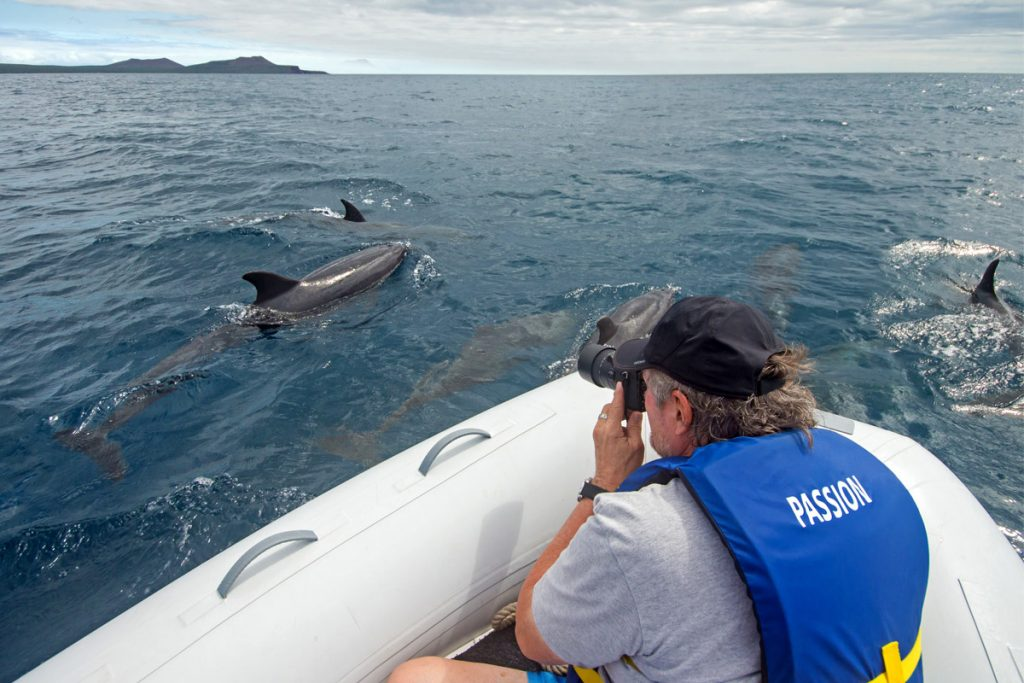 Dolphins in the Galapagos